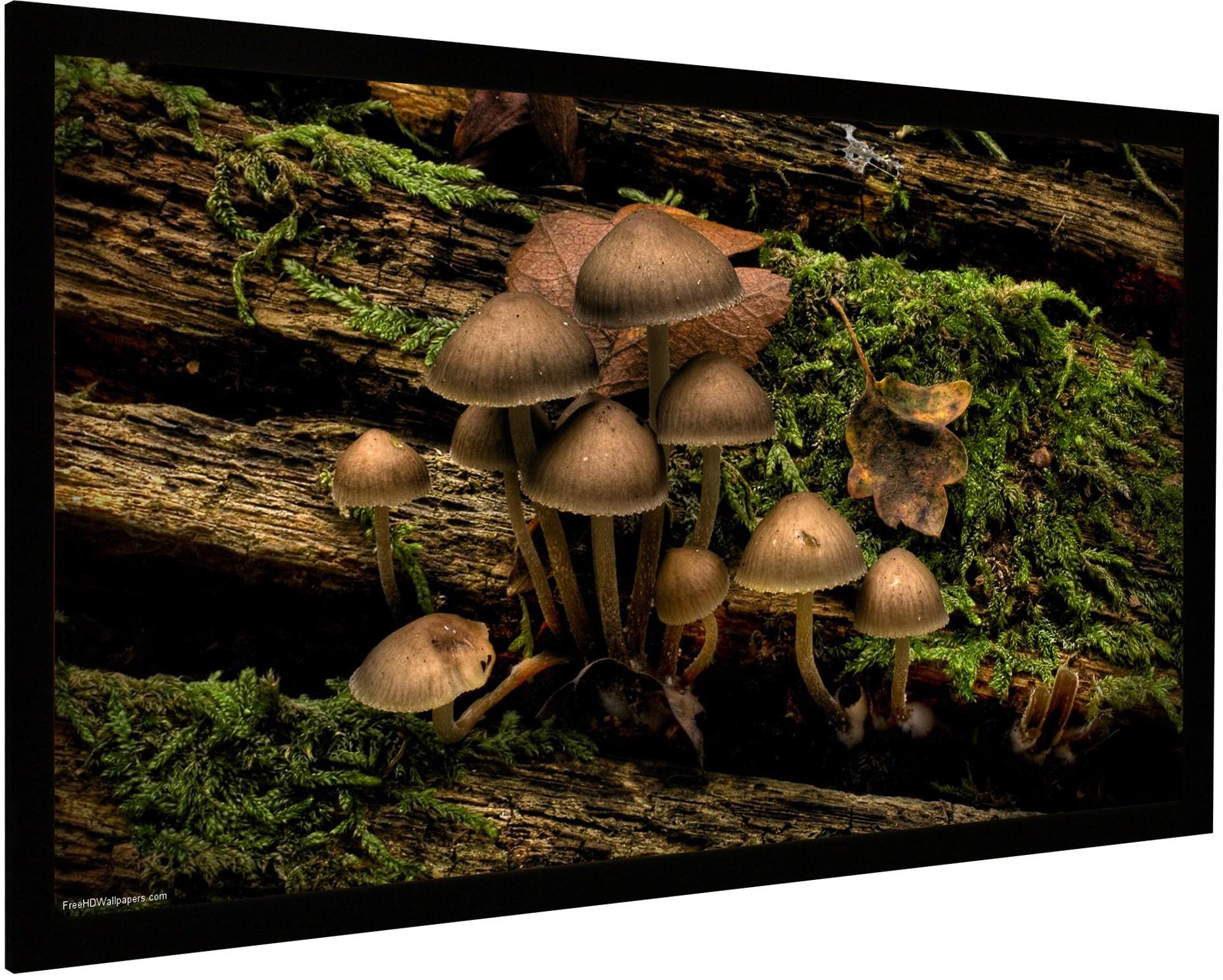 Frame Vision Light 220 x 123,5 cm Flex Grey og Veltex